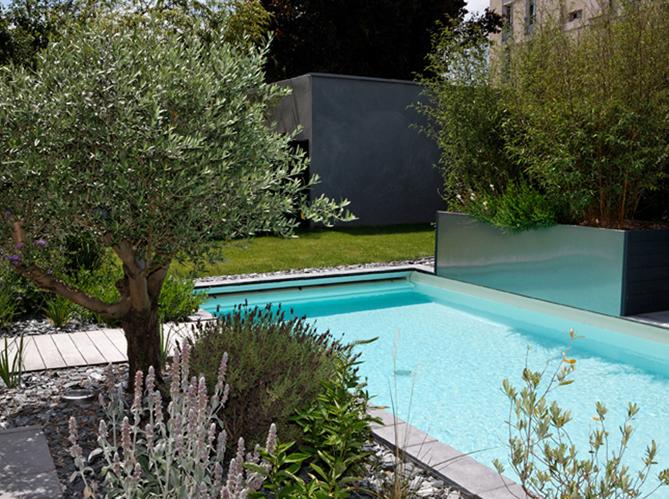 amenagement piscine olivier