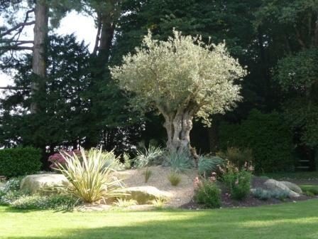 Amenagement piscine olivier - Decorations exterieures de jardin ...