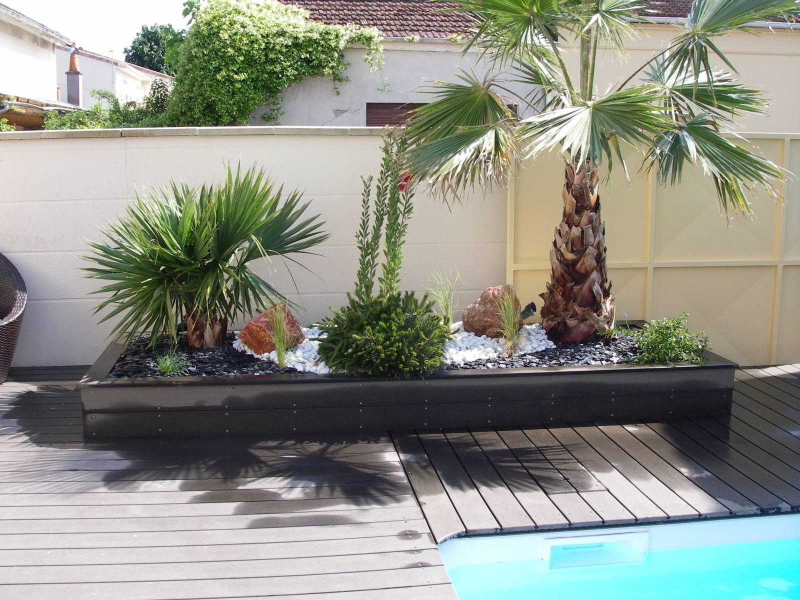 Amenagement piscine palmier - Amenagement autour d une piscine ...