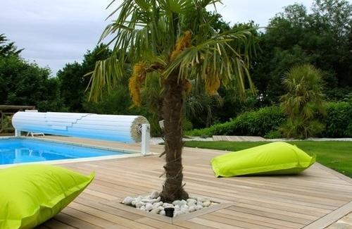 Deco piscine palmier - Deco autour piscine ...